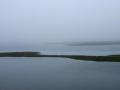 Chasing Egrets - Westport River