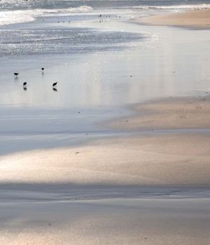 Sand and Birds